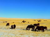 9 Days Beijing and Inner Mongolia Muslim Package