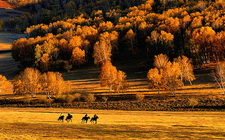 Beijing and Inner Mongolia Muslim Packages