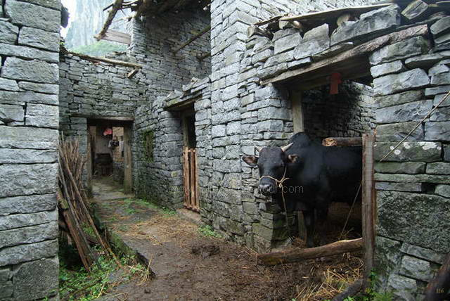 Stone Village, cattle